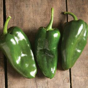 Poblano Pepper Plant 4