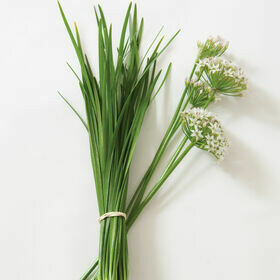 Chives Herb Plant