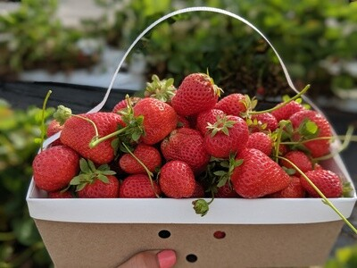 Pick-Your-Own Strawberry Basket