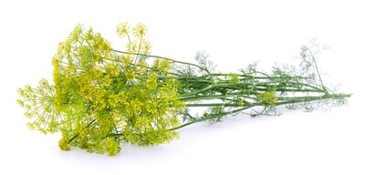 Dill Herb Bunch