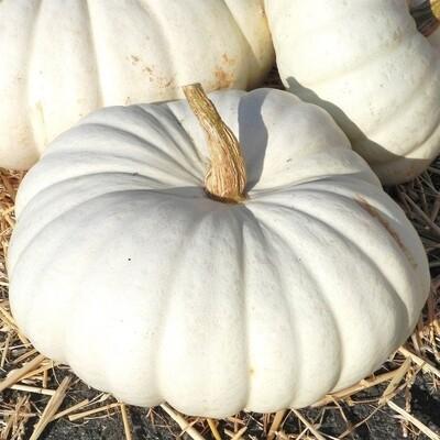 Pumpkin White Flat Stacker