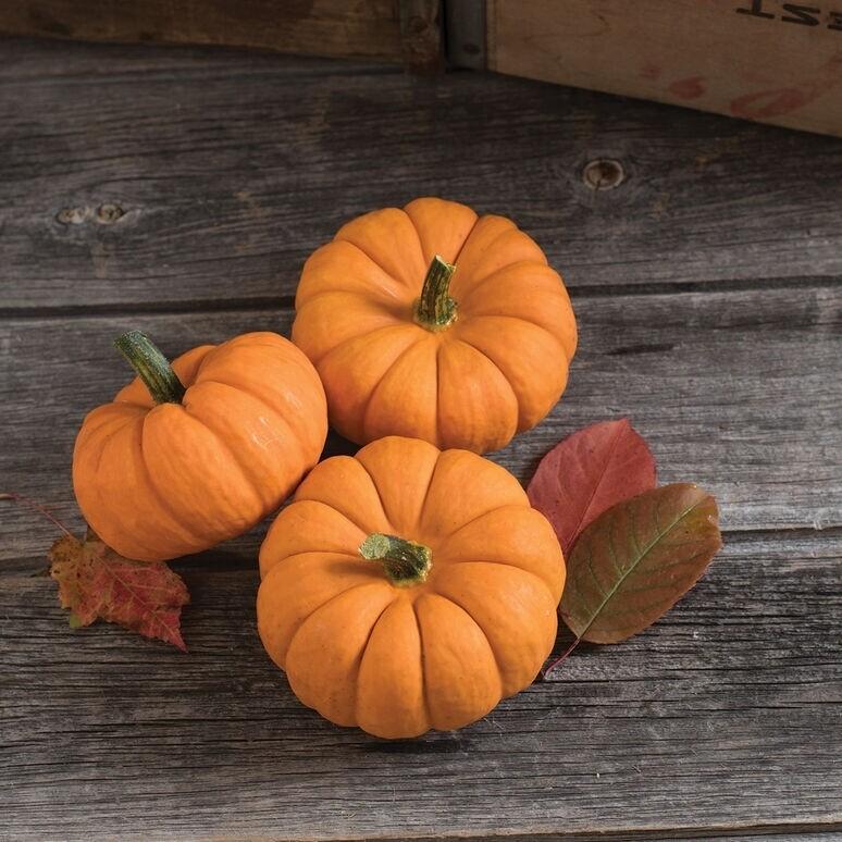 Pumpkin mini orange
