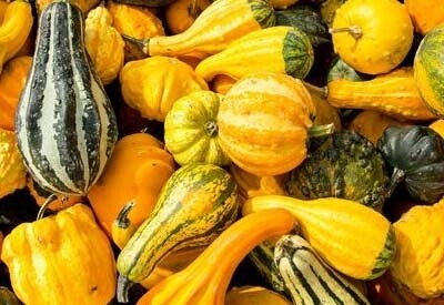 Gourds - assorted ornamentals