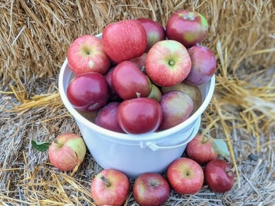 Pick-Your-Own Apples (1/2 Peck Bucket)