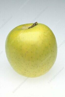 Mutsu - Apple