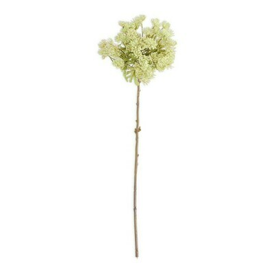 Green Queen Anne's Lace 23.5