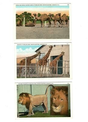 Ringling Bros Winter Headquarters Postcards (6)