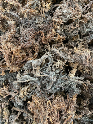 Purple Sea Moss from Tanzania