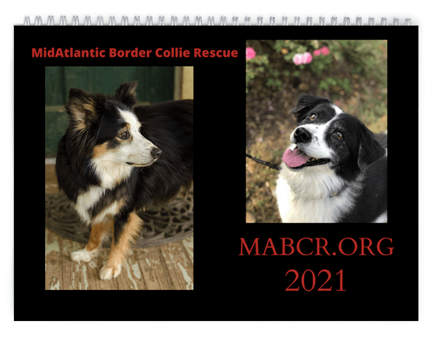 2021 MABCR Calendar