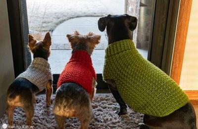 Med- Dog Sweater 50% Deposit