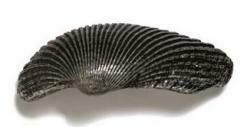 Modern Objects Shell Grip (medium ) Cabinet Knob