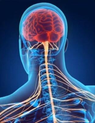 Soin Cérébro-spinal et Nerf Vague