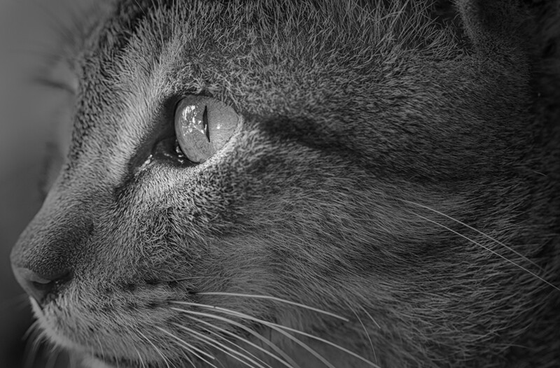 Kitten Profile 0318