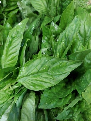 Basil - Bunched * SGF