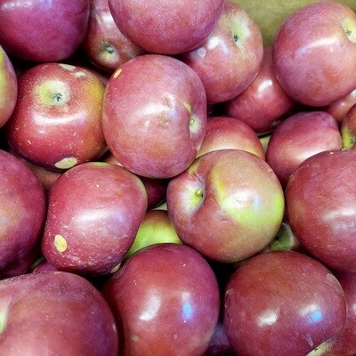 APPLES $2/lb - McIntosh