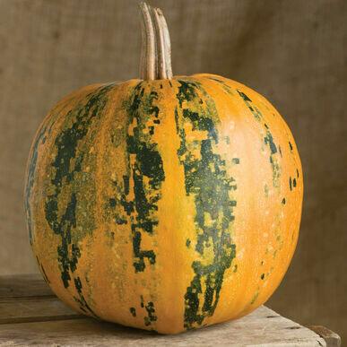**SGF Kakai Seed Pumpkin Small
