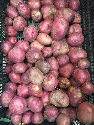 *Maple Row Farm Red Bliss Potatoes 1 lb