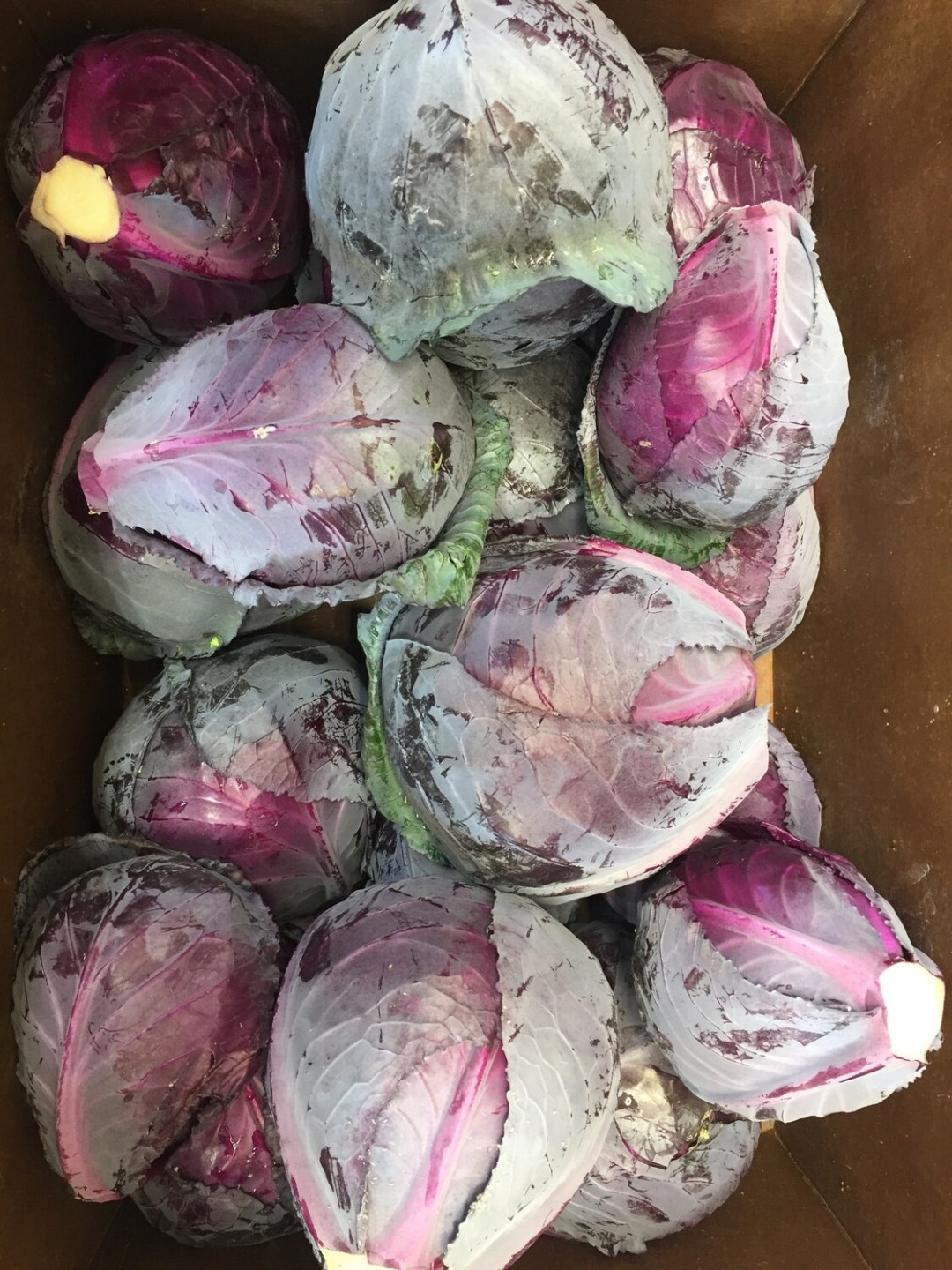 **Atlas Farm Large Red Cabbage