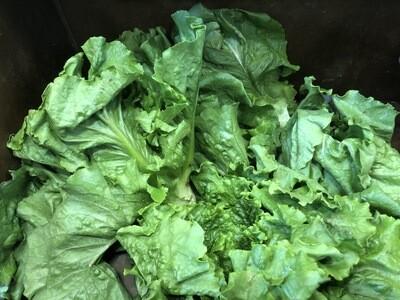 *SGF Head Lettuce
