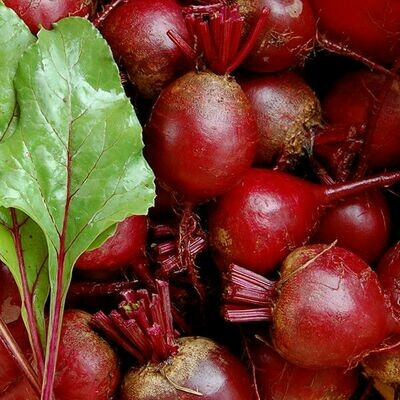 High Mowing SEEDS Detroit Dark Red Beets