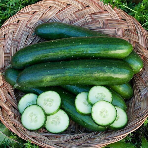 High Mowing SEEDS Green Finger Cucumber