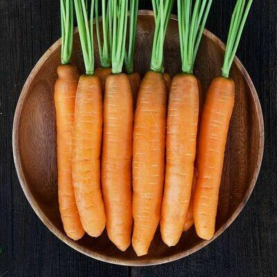 High Mowing SEEDS Yaya Carrot