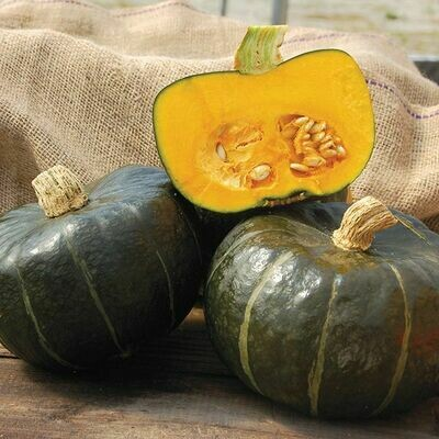 High Mowing SEEDS Burgess Buttercup Squash