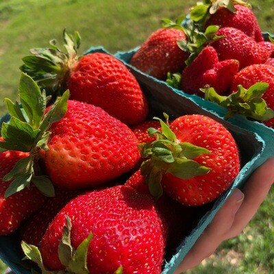 Strawberries - 1 Pint ** SGF