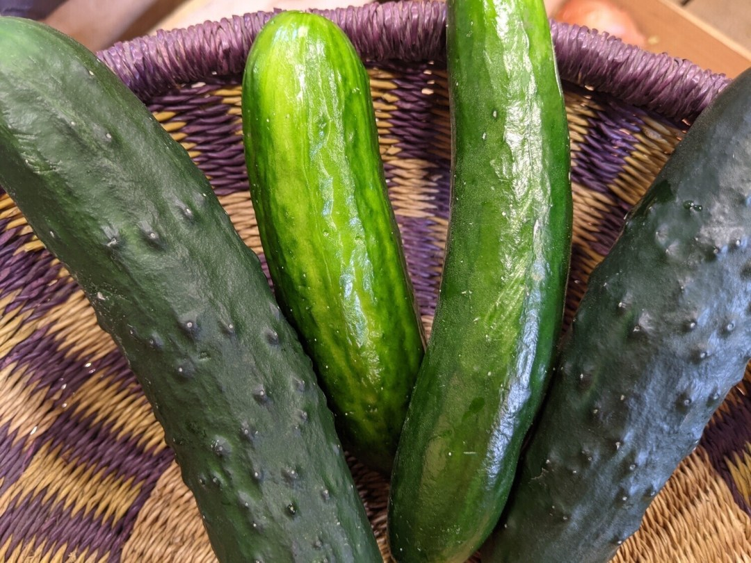 Cucumbers , Hoop House Grown - 1 lb * SGF