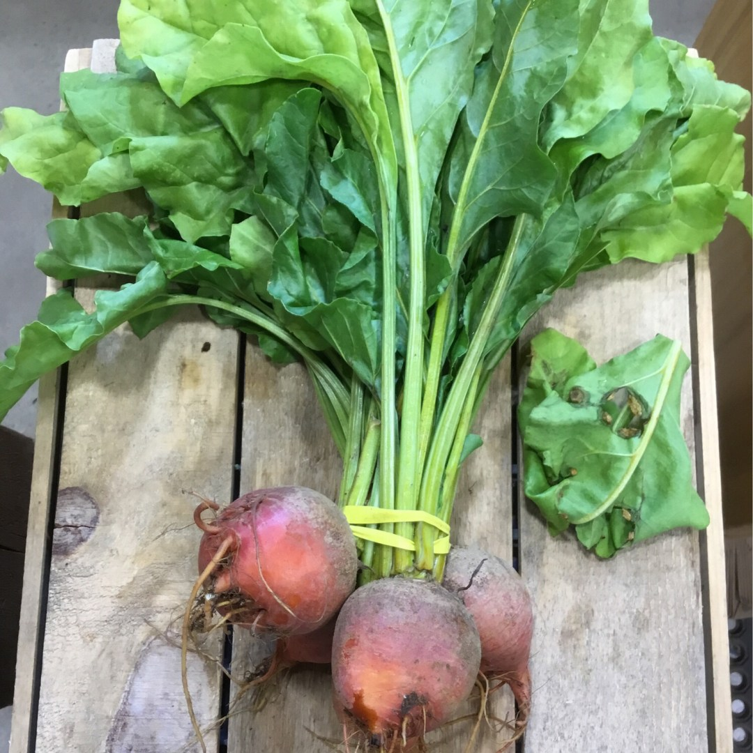Beets , Gold - Bunched * Riverland Farm