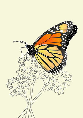 Monarch Butterfly - Illustrated Art Print