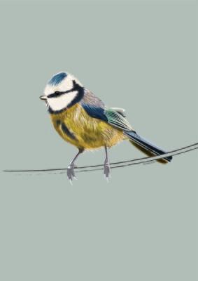 Blue Tit - Illustrated Art Print
