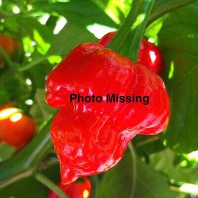 Hanoi Red Pepper Seeds