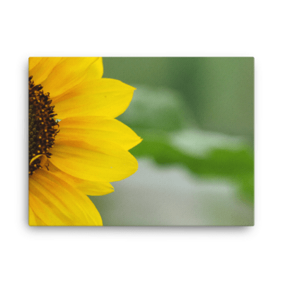Sunflower Fine Art Poster