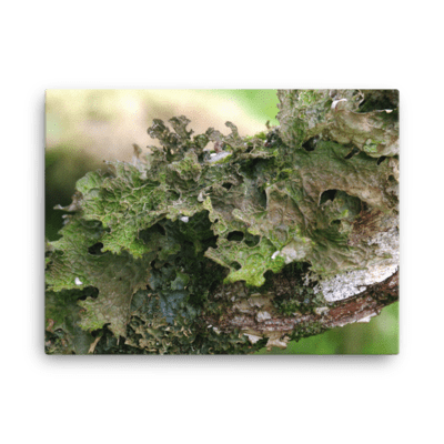 Green Lichen Canvas Print
