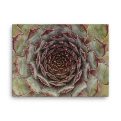 Nature's Mandala Canvas Print