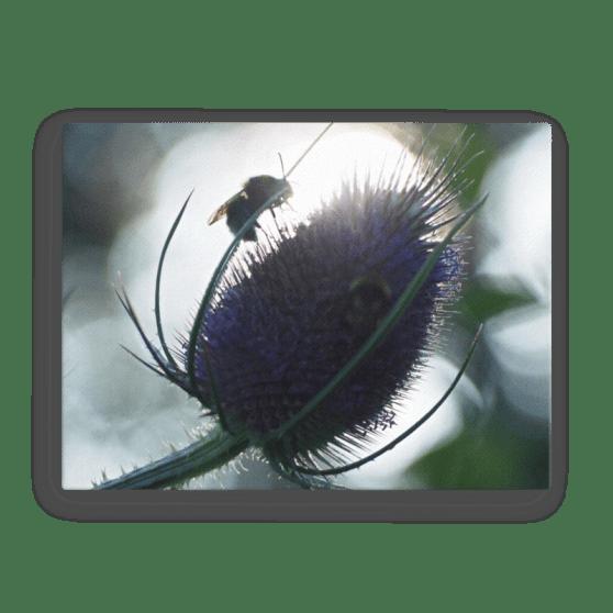 Sunlit Bee Canvas Print