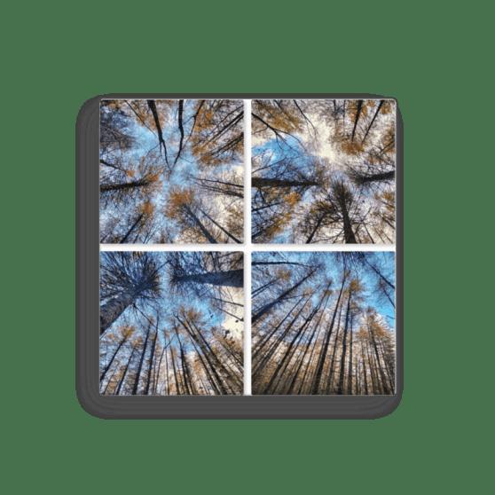 Four Spruce Canvas Print