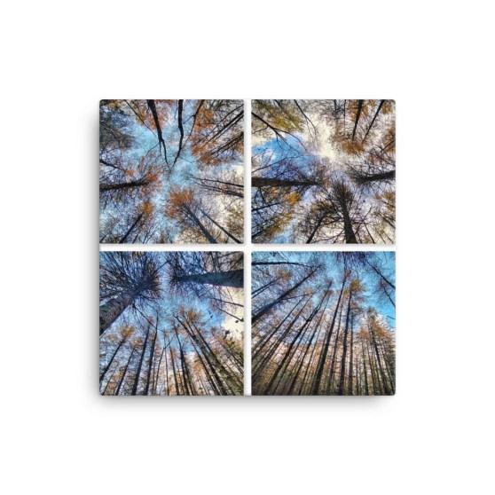 Four Spruce Fine Art Poster