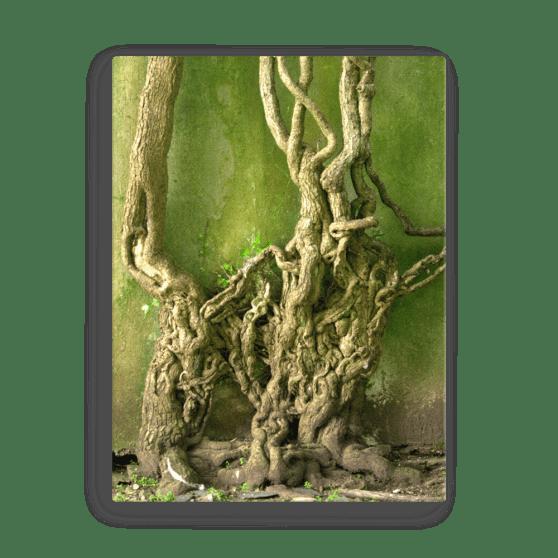 Twisty Green Fine Art Poster