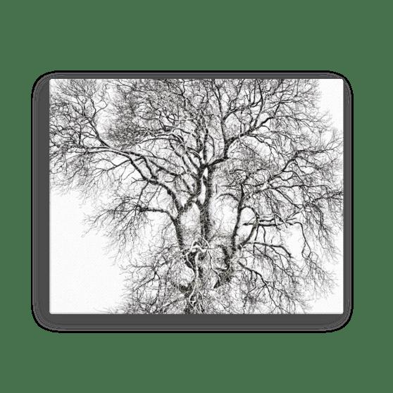 Beech Tree Fine Art Poster