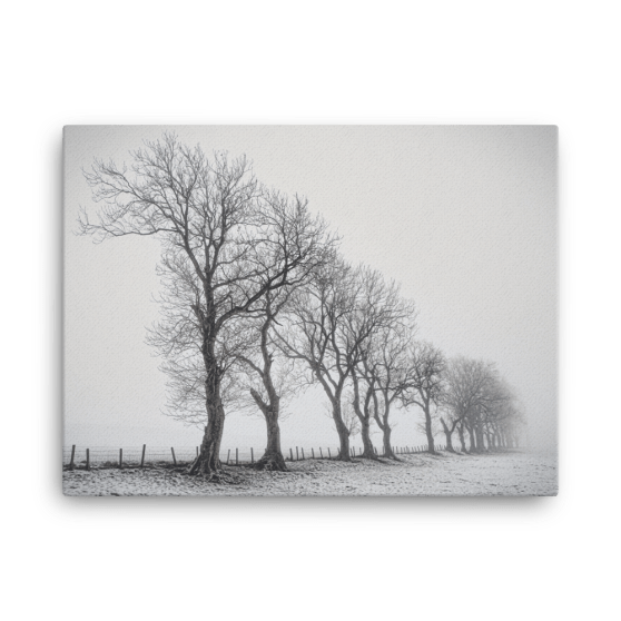 Trees in the Mist Fine Art Poster