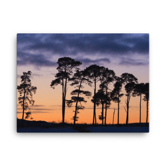 Scots Pine Sunset Canvas Print