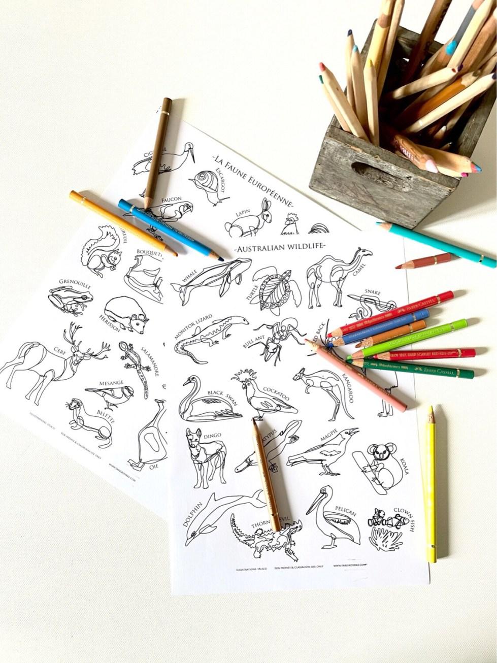 Wildlife Illustrations - Bilingual French and English