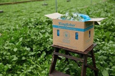 Fruit & veg: watercress. A bunch. Kingfisher Farm, Abinger Hammer.
