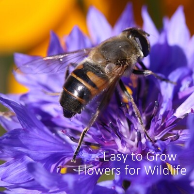 Easy to Grow Flowers for Wildlife
