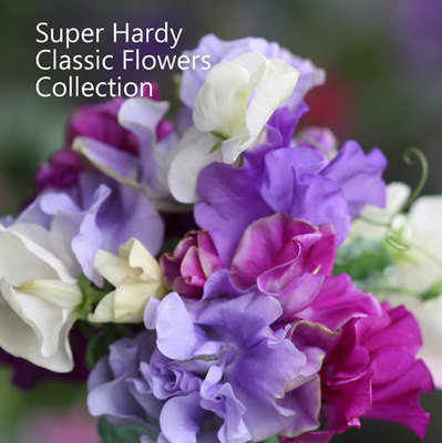 Super Hardy Classic Flowers Collection