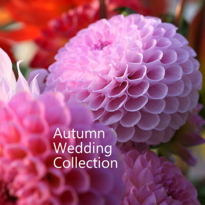 Wedding Collection Autumn