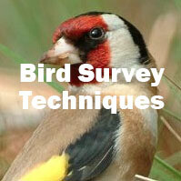 Bird Survey Techniques (Farnham): 2022 date to be confirmed
