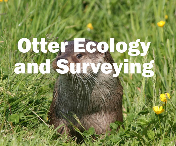 Otter Ecology and Surveying (Exeter): 22nd May 2021 SOLD OUT
